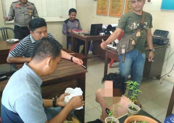 Tanam Ganja, Seorang Remaja Lampung Timur Diciduk Polisi