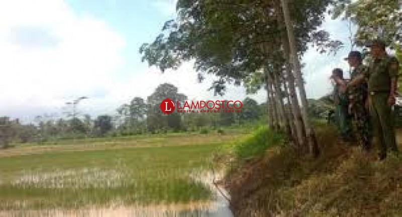 13,725 Ton Benih Siap Disalurkan ke Petani di Lampung