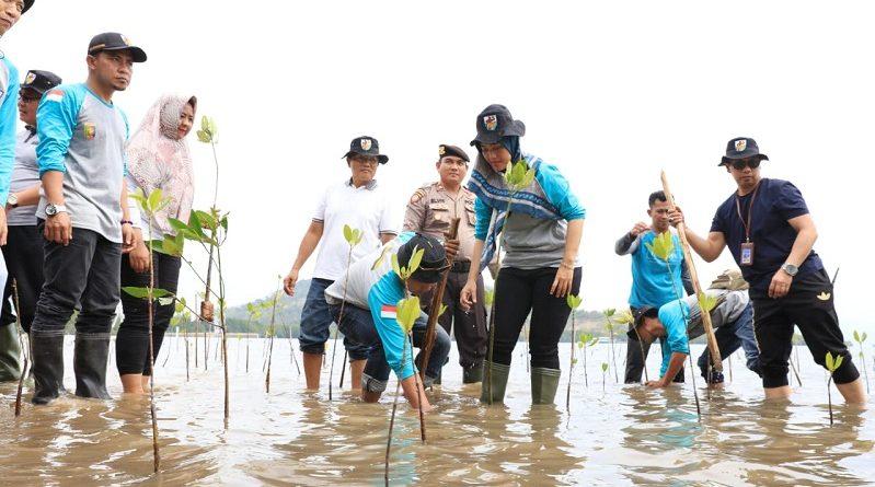 Wagub Chusnunia akan Anggarkan Lokasi Prioritas Penanaman Mangrove
